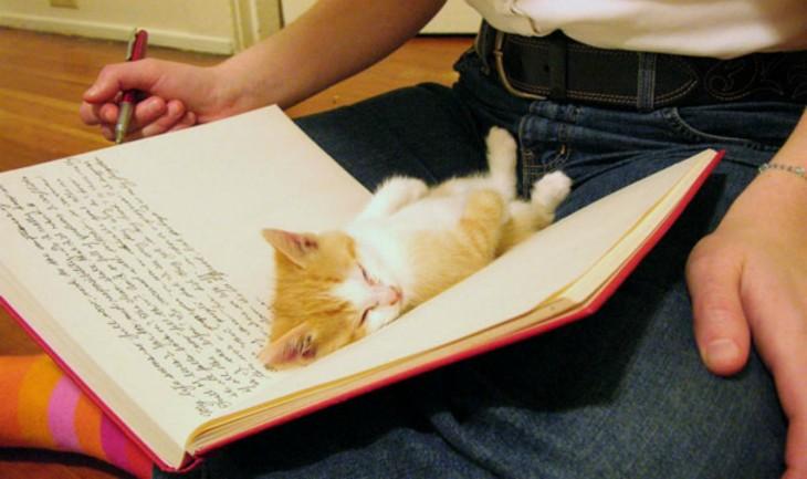 Gato durmiendo en un libro
