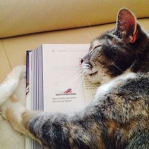 gato durmiendo sobre un libro