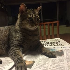 Gato sobre un periodico