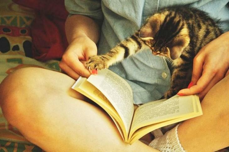 gato leyendo sobre las piernas de una chica