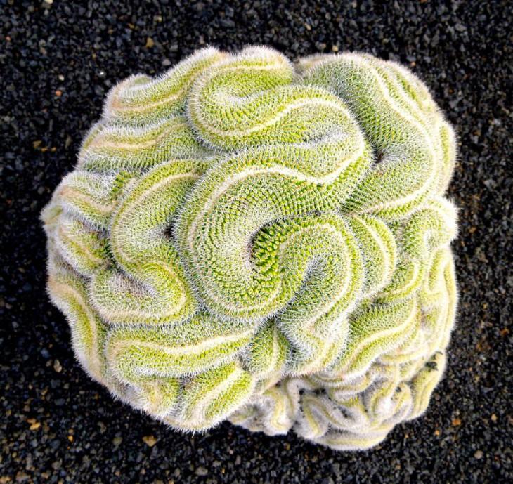 Geometría de un cactus
