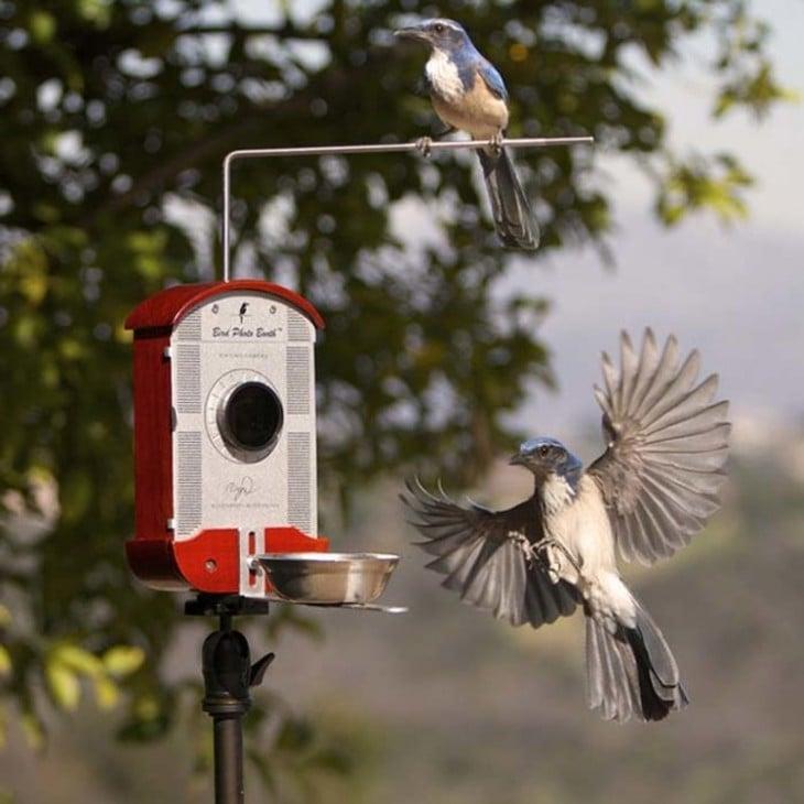 Comedero para pájaros con cámara