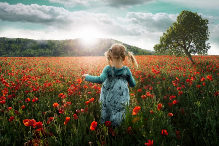 Into the Poppies