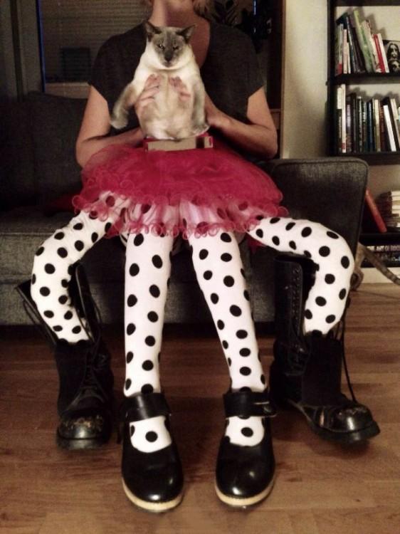 Gato con 4 patas largas con medias y zapatos