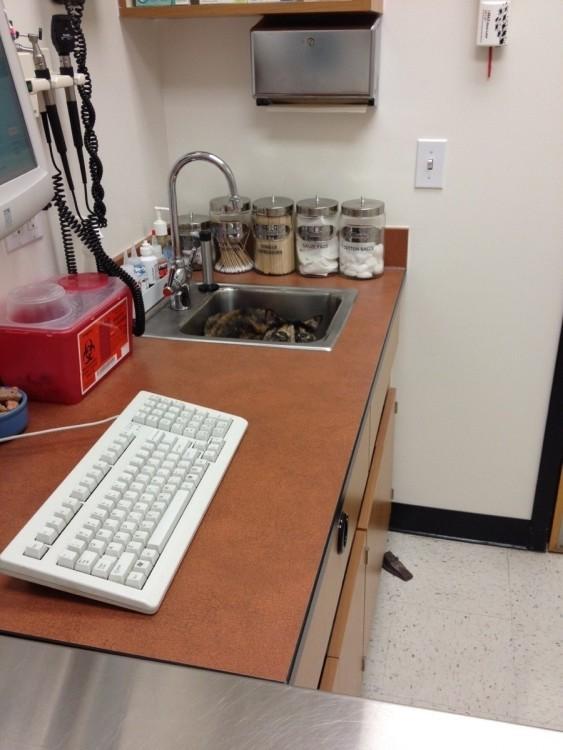 Gato dentro de un fregadero