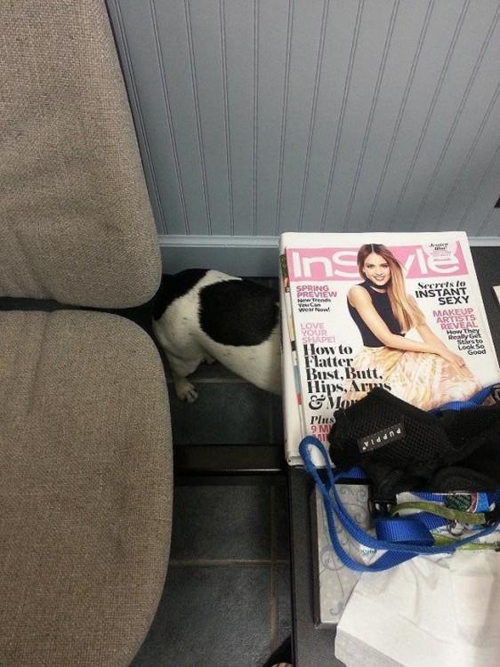 Perro escondido bajo una mesa
