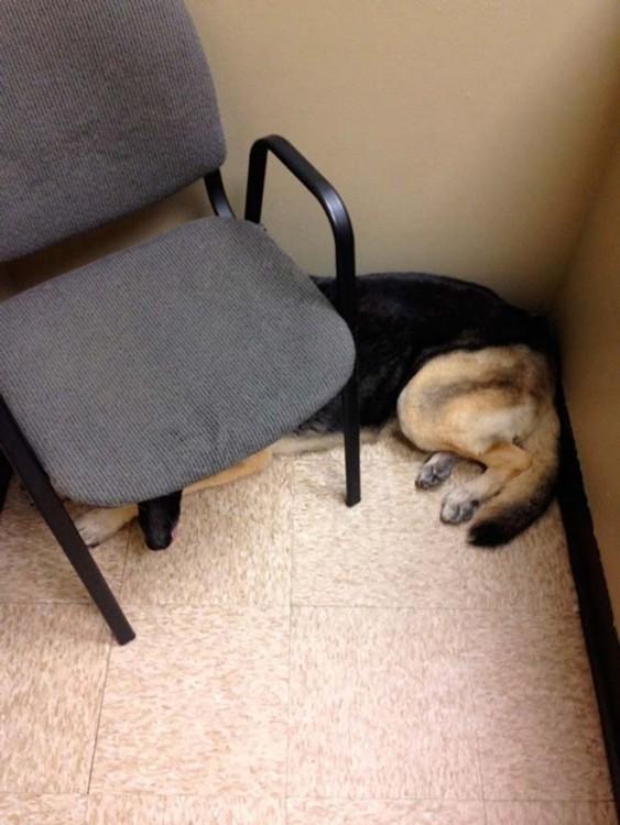 Perro acostado bajo una silla
