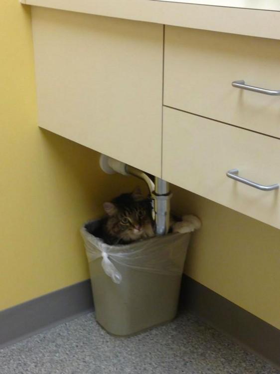 Gato dentro de un basurero