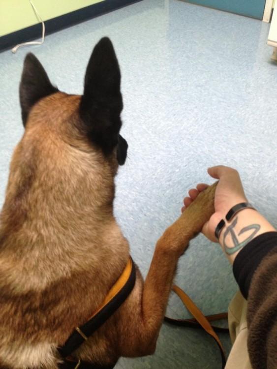 Perro dando la pata a su amo