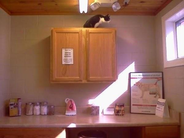 Gato arriba de un mueble casi alcanzando el techo