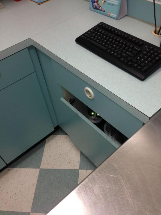 Gato escondido dentro de un cajón
