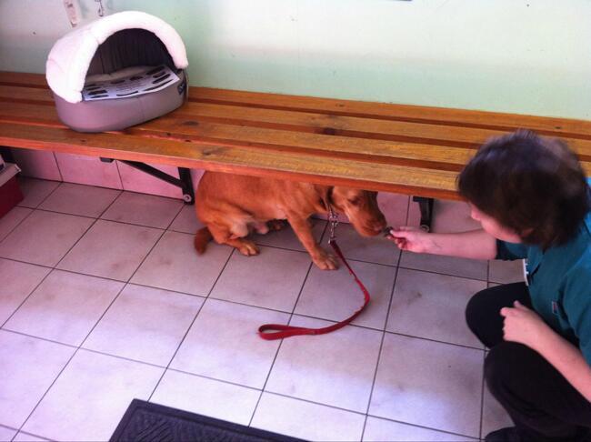 Perro escondido debajo de una banca