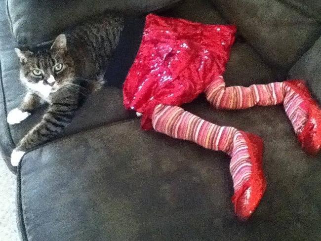 Gato con medias, falda y zapatos rosas