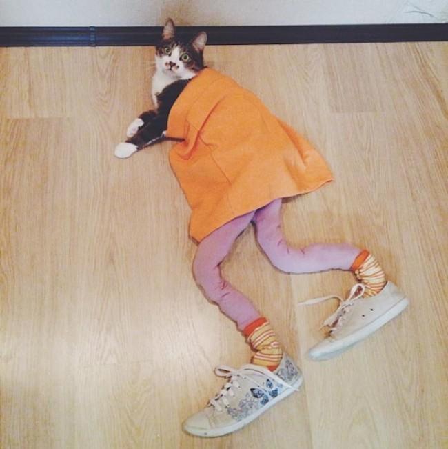 Gato en el suelo con medias y zapatos