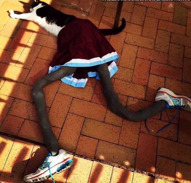 Gato en el piso con medias y tenis