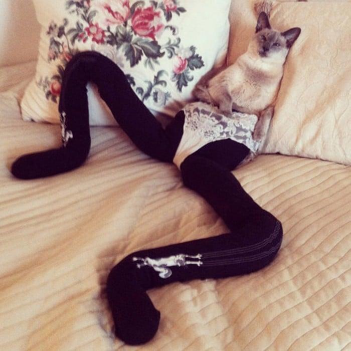 Gato acostado en una cama con medias negras