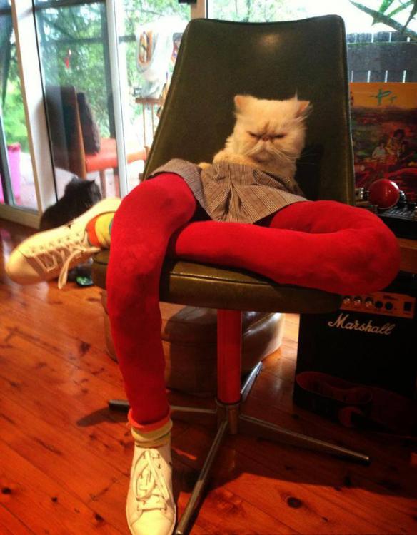 Gato con medias rojas y tenis