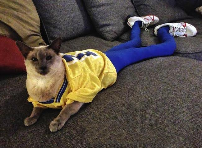 Gato con outfit deportivo