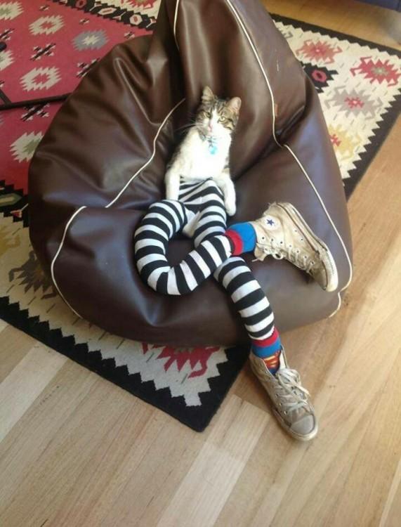 Gato en un sofá con medias y tenis