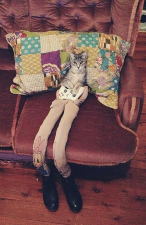 Gato con medias y un control de videojuego