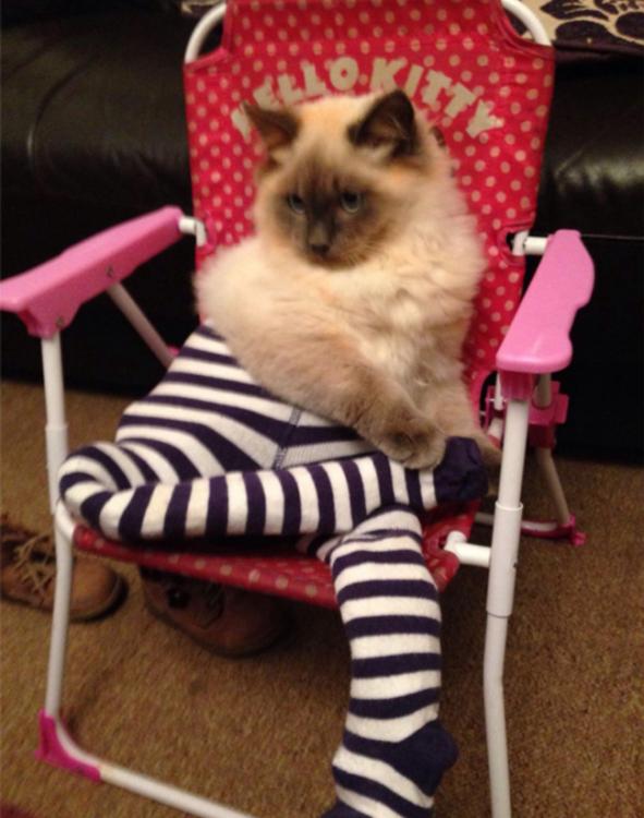 Gato con medias sentado en una silla