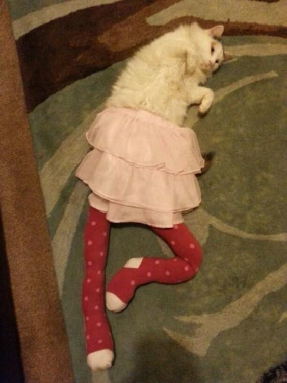 Gato vestido de bailarina de ballet