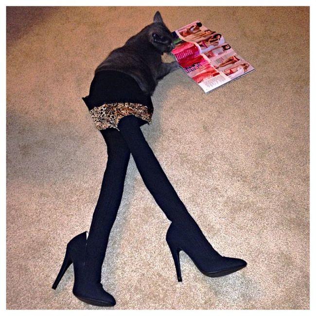 Gato negro con medias viendo una revista