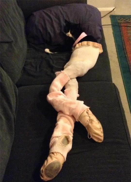 gato con medias de ballet