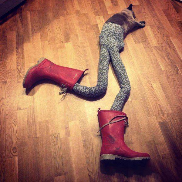 Gato acostado en el suelo con medias y botas