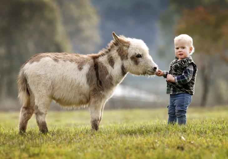 Niño frente a un burro miniatura