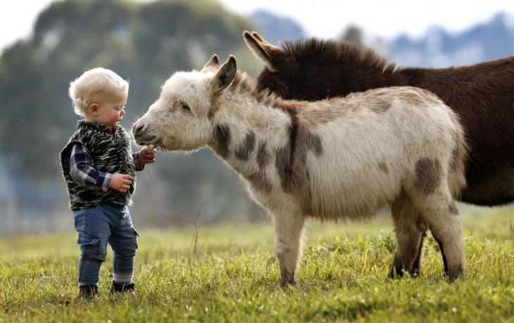 Niño acariciando un burro miniatura