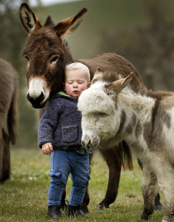 Niño en medio de dos burros miniatura