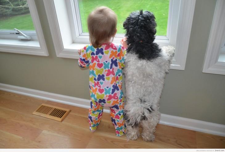 Niño junto a perro mirando por la ventana