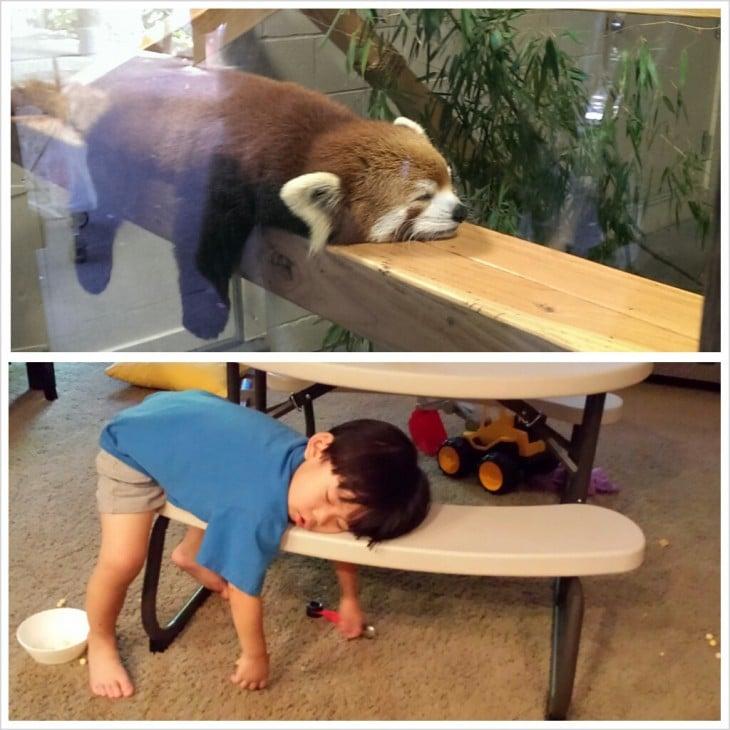 Niños que se creen animales duermen como mapaches