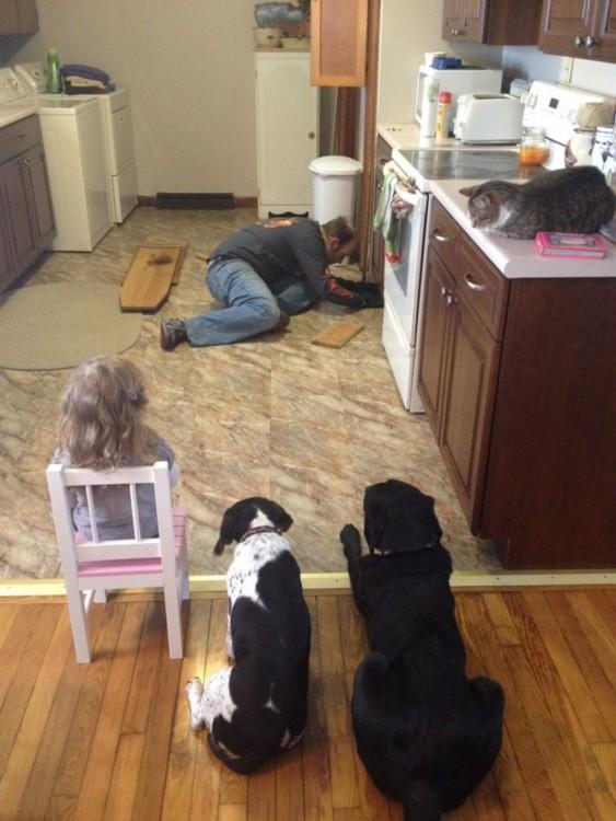 perros gato niña y padre, en la cocina