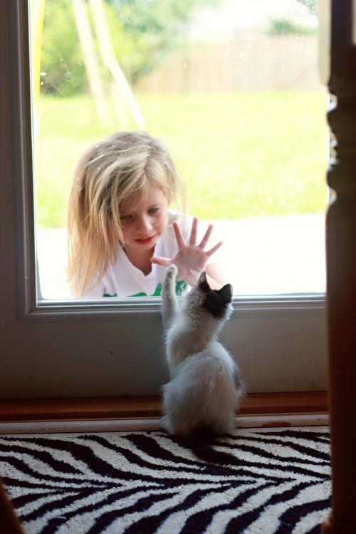 Niña junto a gato en una ventana