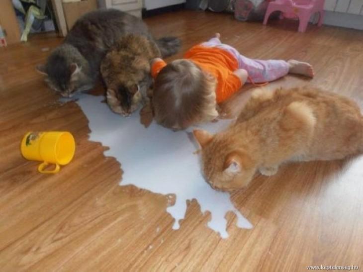 Niño tomando leche del piso junto a 3 gatos
