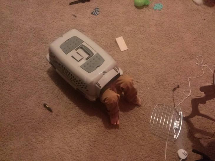 Niño en caja de perro