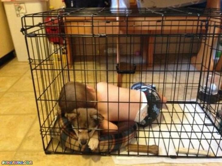 Niño en corral de perro