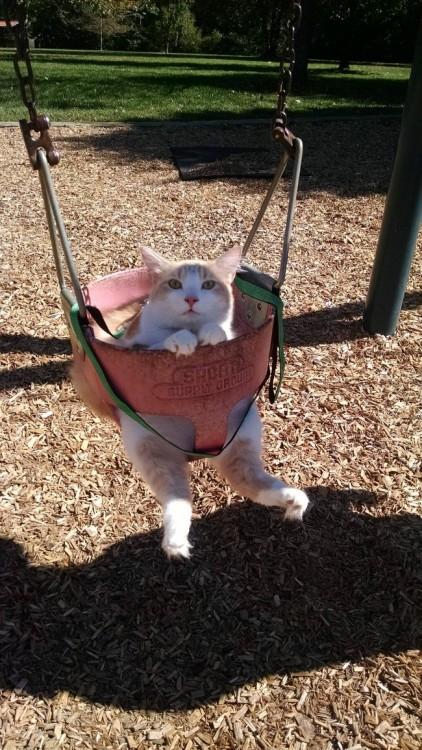 Gato sentado en un columpio