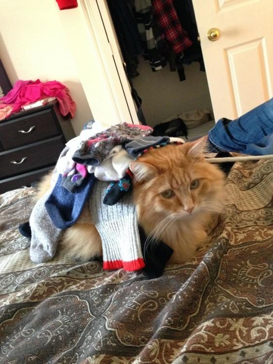 Gato sobre una cama con ropa encima de él
