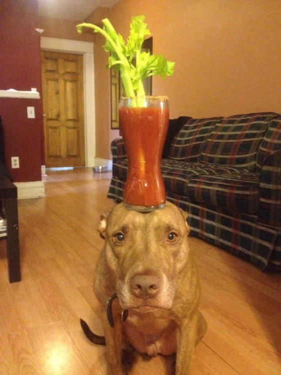 Perro con un vaso sobre su cabeza