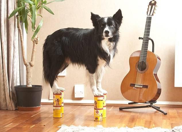 Perro sobre una latas