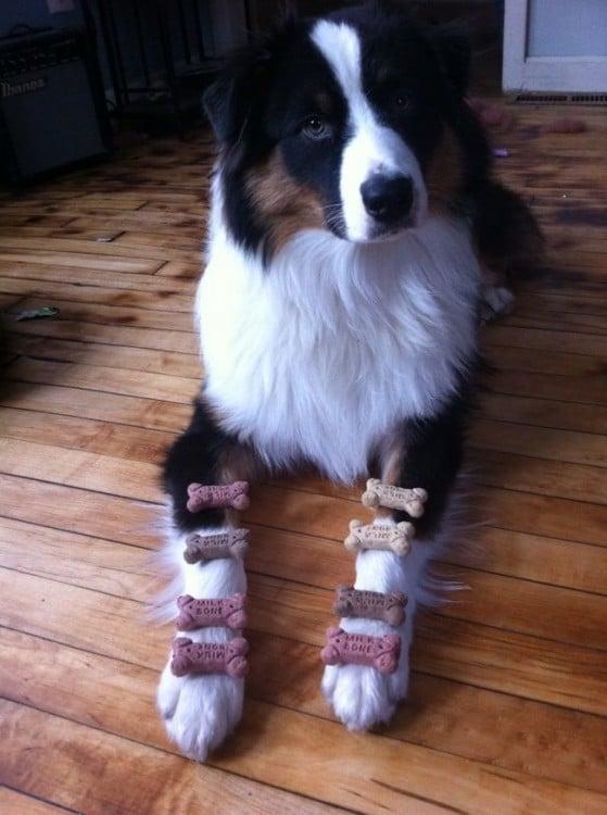 Perro con huesitos en las patas delanteras