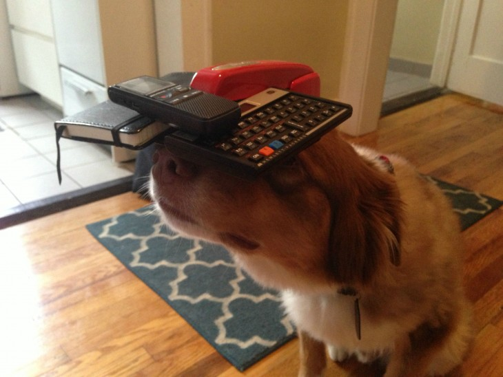 Perro con cosas en su cabeza