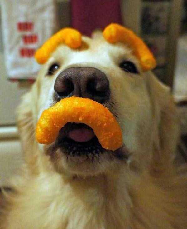 Perro con cejas y bigotes de churros