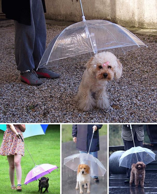 Paraguas diseñada para perros