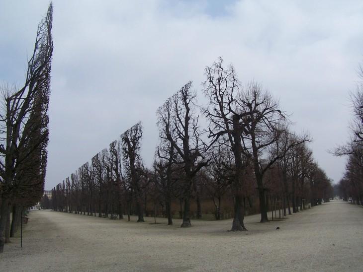 Árboles alineados