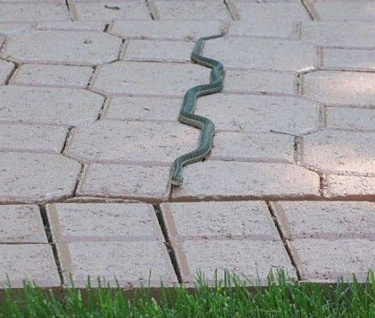 Serpientes siguiendo una línea