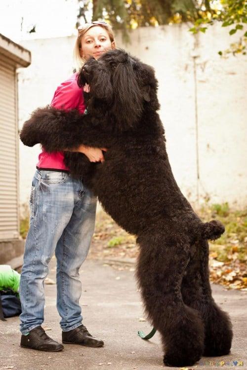 gran perro negro abrazando ahombre